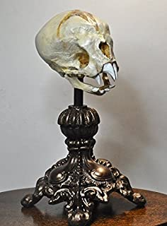Nosferatu Fetal Skull Display