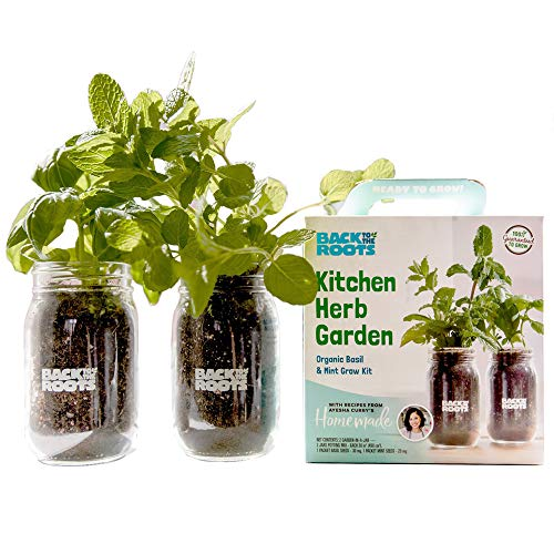 Organic Indoor Herb Garden Kit By Back to the Roots – Non-GMO Basil and Mint Plants...