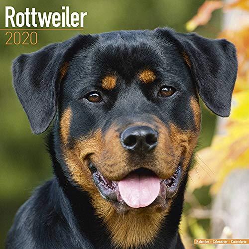 Rottweiler Calendar 2020