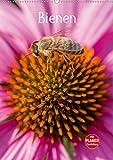 Bienenplaner (Wandkalender 2020 DIN A2 hoch): Bienen für das ganze Jahr (Planer, 14 Seiten ) (CALVENDO Tiere)
