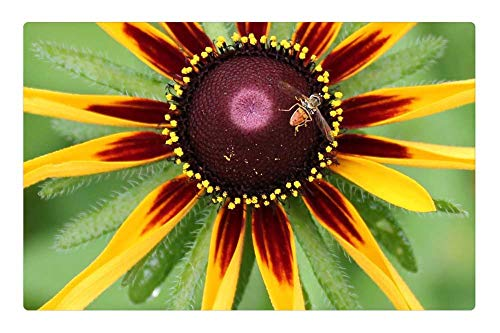 LESGAULEST Doormat Floor Rug/Mat (23.6 x 15.7 inch) - Nature Summer Flora Bright Beneficial Insects