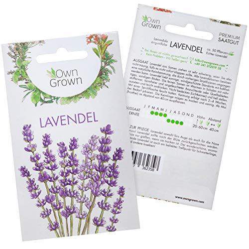 Lavendel Samen: Premium Lavendelsamen für ca. 50 duftende Lavendel Pflanzen – Lavendel Pflanze Samen, Mehrjährig und Winterhart – Garten- und Balkonpflanzen Winterhart, Blumensamen Balkon von LAVODIA