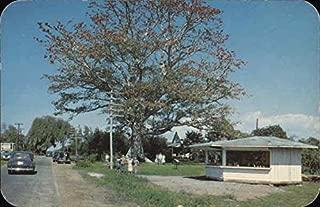 kapok tree clearwater florida
