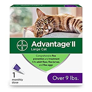 Advantage II Flea Prevention and Treatment for Large Cats, Over...