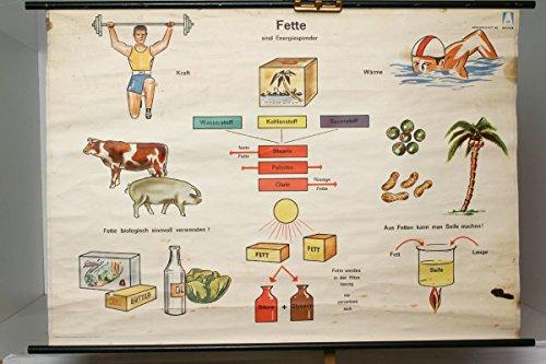 vintage13.de. de schulwandkarte Roll Tarjeta explicativo Sobre Grasas Son Energía dispensador de Nutrición Alimentos