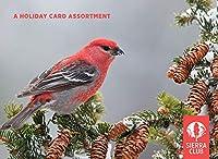 Sierra Club 冬の鳥 詰め合わせ ホリデーカード