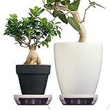 ポットキーパー【2個セット】観葉植物 鉢 鉢皿 清潔グッズ 掃除を簡単に フロスティグレー