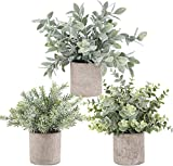 Der Rose 3 Pack Mini Potted Fake...