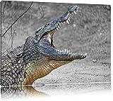 gewaltiges stolzes Krokodil schwarz/weiß auf Leinwand, XXL