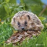 Tierbabys 2020 - Baby Animals - Wandkalender - Broschürenkalender (30 x 60 geöffnet) - Tierkalender - Wandplaner - ALPHA EDITION