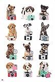 Hunde - Kamera - Tiere Hunde Poster Plakat - Grösse