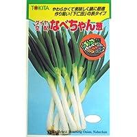 ネギ 種 なべちゃん葱 小袋(約20ml)