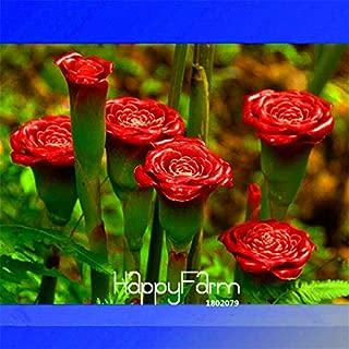 Flowers Seeds Plant Seeds Time-Limit!! 100 Pcs/Bag Red Carnation 'Red Up Lamp Bulb' Perennial Flower Garden, Bonsai Fragrant Flower
