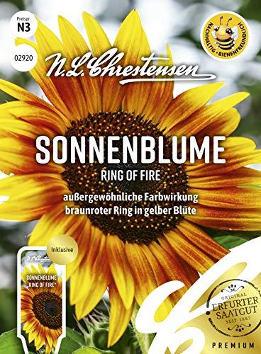 Sonnenblume Ring of Fire, außergewöhnliche Farbwirkung, bienenfreundlich, Samen