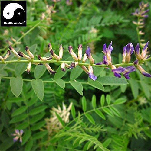 Réglisse chinois racine Graines Herbal Réglisse Bonsai Glycyrrhiza glabra L. Plante Sementes naturel Gan Cao