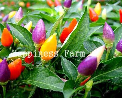 SANHOC Livraison Gratuite 200 pcs Piment légumes Doux de Bell Hot Pepper Bonsai Chilli légumes Paprika Plante pour Jardin Fleur: f