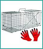 Praknu Marderfalle Lebendfalle 79cm Groß - Effektiv - Sicher inkl. Handschuhe - für Katzen, Fuchs,...