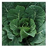 David's Garden Seeds Collards Georgia Southern 1223 (Green) 200 Non-GMO, Heirloom Seeds
