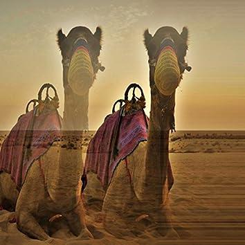 1001 Camels