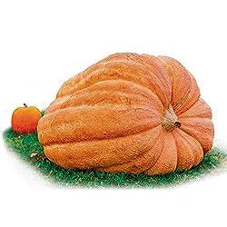 10 pc Lumina White Pumpkin Seeds Fresh Home Garden Fruit Seed Halloween Decor