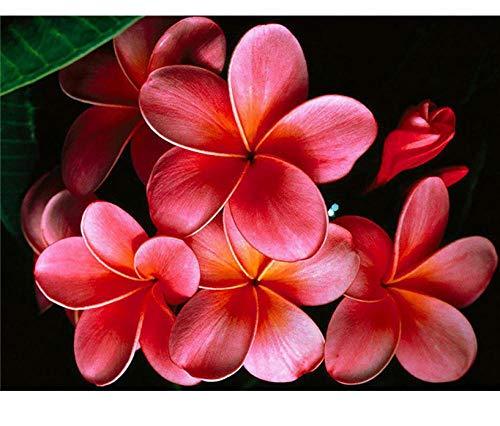 SDHJMT schilderen op basis van cijfers rode bloem abstracte kunst kleur DIY canvas kit beginners eenvoudige bediening 20x24inch