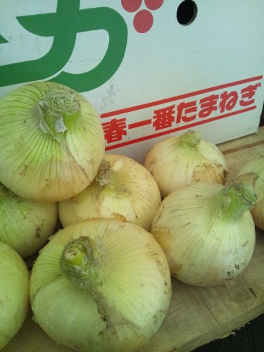 新たまねぎ・たまねぎ 佐賀県産 1ケース 約10kg
