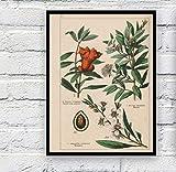 Botanical Collection Vintage Poster Und Drucke Kräuter