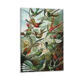 xiaochouyu Animal Art Birds - Póster de colibríes de Haeckel de PatentPrintStore sobre lienzo y arte para pared, diseño moderno de colibríes de 50 x 75 cm