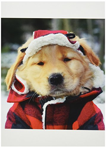 Nouvelles Images Holiday Boxed Note Card Set, Golden Retriever Greetings (XDB 451)
