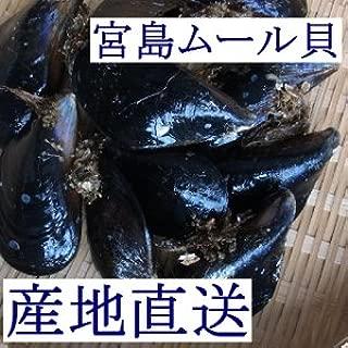 天然「活き宮島ムール貝」2kg