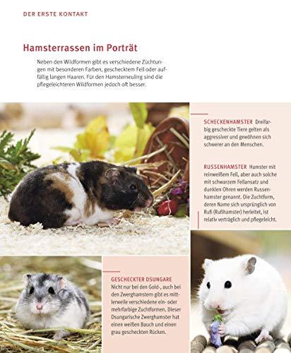 Hamster: Pflege-Einmaleins für kleine Solokünstler (GU Tierratgeber) - 7