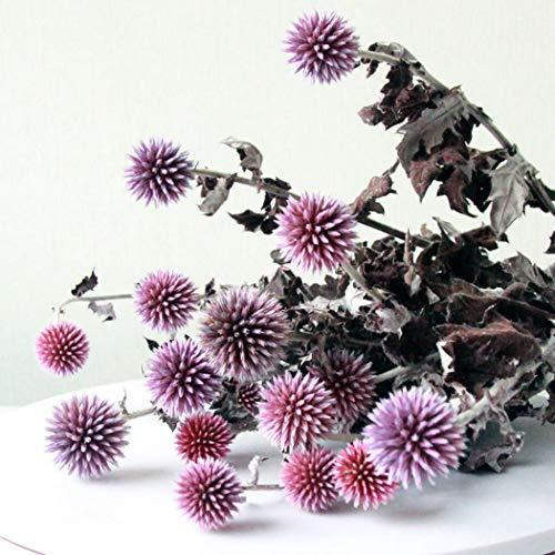 Bageek Flores Preservadas, 1 Ramo de Flores Preservadas Naturales Echinops Latifolius Flores secas para la decoración del hogar