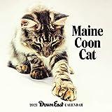 Maine Coon Cat 2021 Calendar