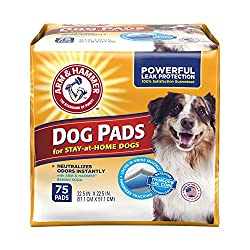 Best Dog Pee Pads (How To Keep Your Floors Clean