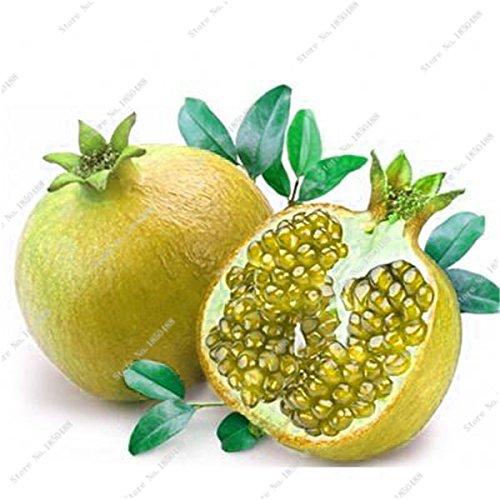 Grenade rare géant Graine Japon Bonsai savoureux fruits bio Heirloom non Ogm Multi Color Fruit Graine Arbre à feuilles persistantes 30 Pcs/Lot 8