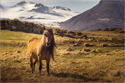 Posterlounge Acrylglasbild 30 x 20 cm: Islandpferd   Island   Pferd von Justin Schümann - Wandbild, Acryl Glasbild, Druck auf Acryl Glas Bild