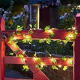 Hiedra Artificial Luces, Luces de Hadas 2M 20LED (Funciona con pilas) Luces de noche de hadas para el hogar/boda/fiesta/Decoración (5 Pack)