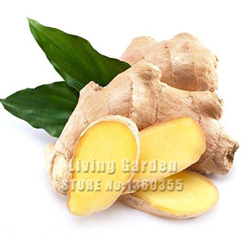 Promotion! 100 Pcs Ginger graines Semences Potagères Balcon Légumes Graines Bonsai plantes en pot Four Seasons Zingiber Graines Plantes