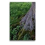 Toile de qualité supérieure en tissu 50 cm x 75 cm - Septembre : dans l'ombre des racines vigoureuses - Impression sur toile - CALVENDO Nature