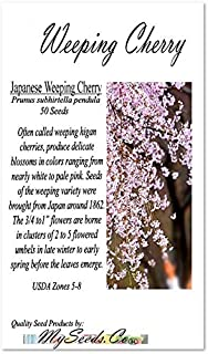 BIG PACK - (50) JAPANESE Weeping Cherry Tree Seed - Prunus subhirtella pendula Seeds - By MySeeds.Co (Big Pack - Weeping Cherry)