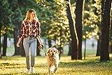 SMARTPAWS Hundekotbeutel biologisch abbaubar mit Bio Beutelspender | 100% kompostierbare Kotbeutel für Hunde | Extra große und Starke Hundebeutel für Sensible Hunde - Hund