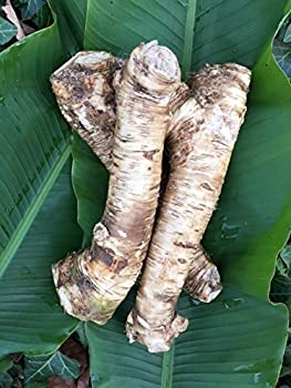2 Lb Horseradish Root Great for Planting! Enjoy All Its Health Benefits! Sold By Weight so You May Receive One Large Root or Several Small Ones Depending on Harvest NON GMO Gluten Free