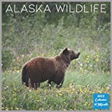 Alaska Wildlife 2022 Calendar: Official Alaska Wildlife 2022 Calendar, 16 Month Square Calendar