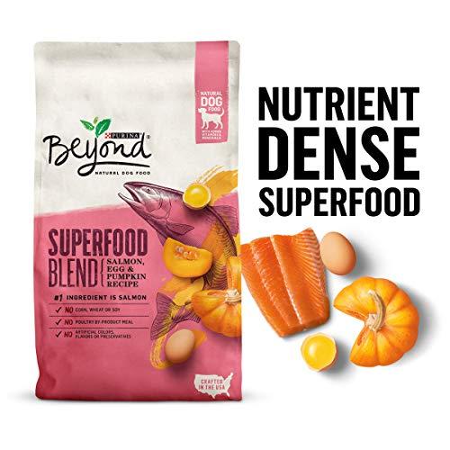 Purina Beyond Superfood Blend Dog Food