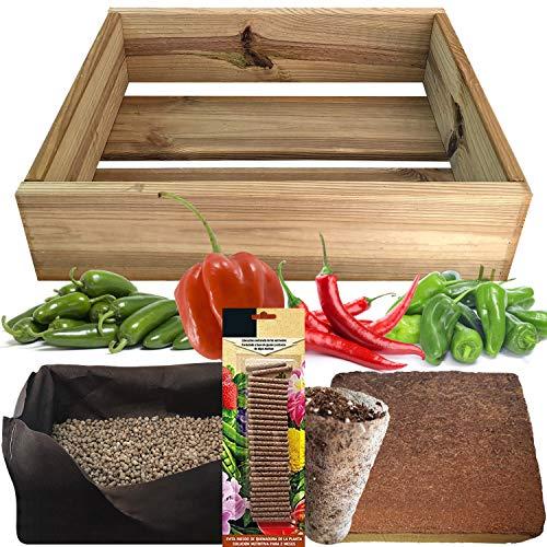 Garten aus behandeltem Kiefernholz.Samen von Habanero-Pfeffer, Cayenne-Pfeffer, Jalapeño-Pfeffer, Padrón-Pfeffer.
