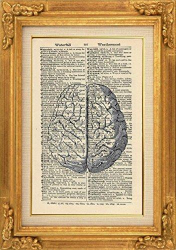 HUMAN BRAIN ART PRINT - ANATOMY ARTWORK - VINTAGE ART PRINT - ART - Illustration - GIFT - Vintage Dictionary Art Print - Wall Hanging - Home Décor - Housewares - Book Print - 370Bf steampunk buy now online