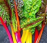 Fresh Seeds – Vegetal Swiss Chard Rainbow Mix – 150 Semillas – Rosa rojo amarillo naranja acelga