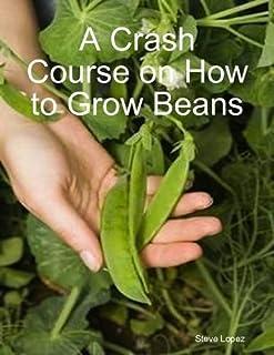 A Crash Course on How to Grow Beans