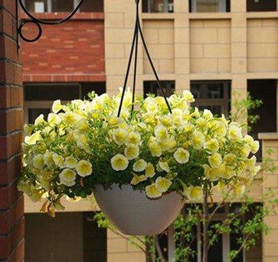 Perte de promotion! 50 PCS / Paquet vert citron Graines Fruit Jardin Terrasse semences pot Bonsaï Graines, # 73Y3O5