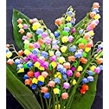 家庭菜園6 PLAT会社-SEEDS 100個/袋珍しいベルオーキッドシード花カンパニュラ盆栽花の種9色スズラン種子植物の鉢